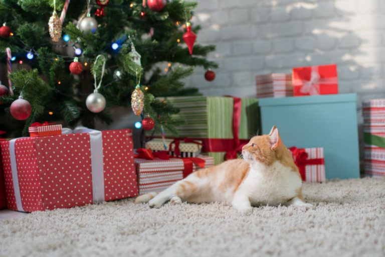 How To Cat Proof Your Christmas Tree.Pet Proofing Your Christmas Holidays Petroglyph Animal