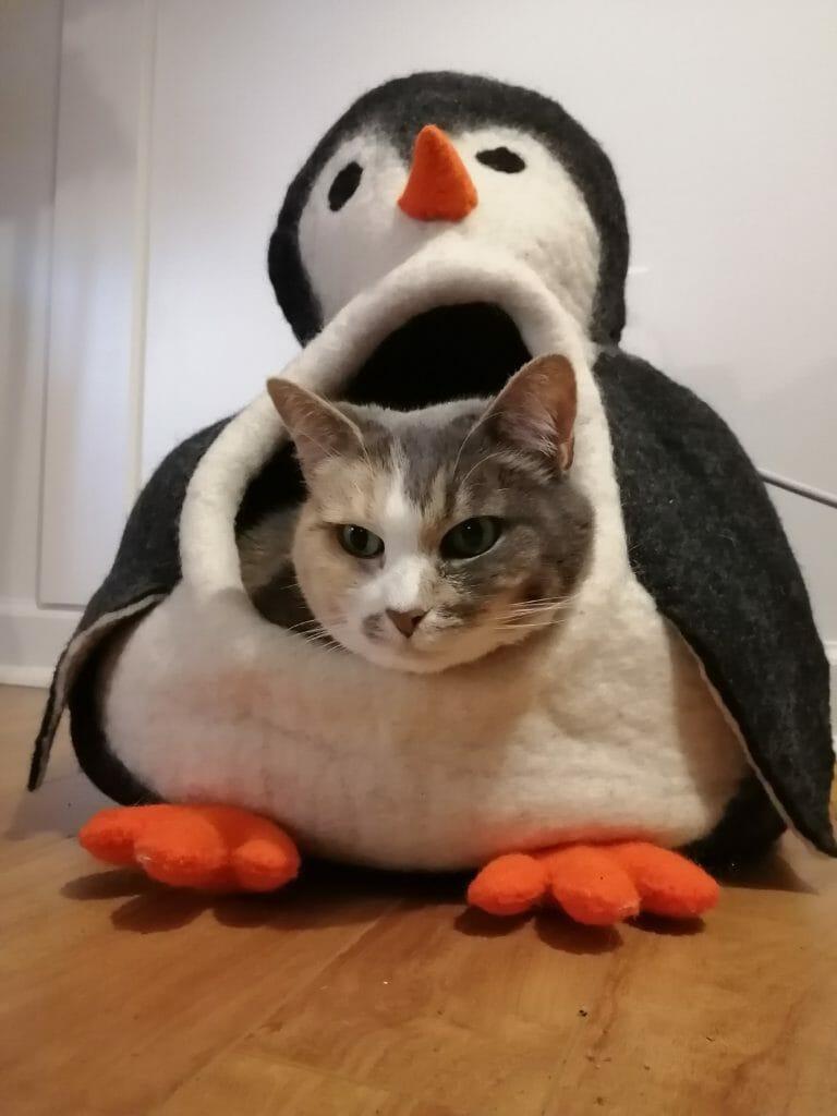 Cat in Penguin costume